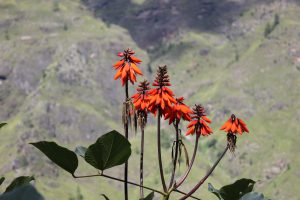 Flower Growing in Higher Altitude
