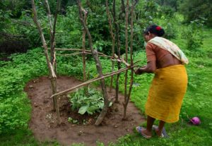 Lady doing Fresh Plantation