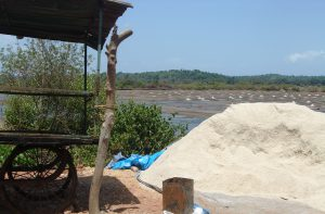 Sea Salt & Salt Pan in Goa
