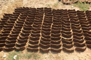 Cowdung Cake to be used as Fuel