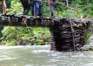 Bridge made of Nature