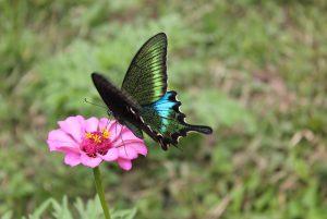 A Lovely Butterfly