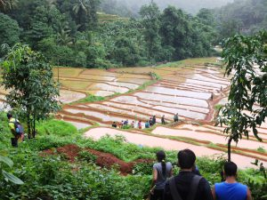 Traversing through Paddy Plantation