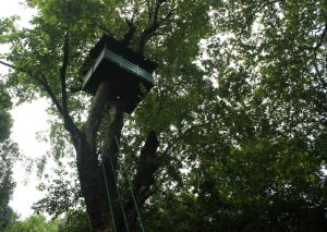 Watch Tower