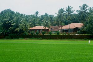 10 Beautifully Located Local House
