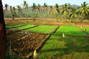 3 Field Under Preparation