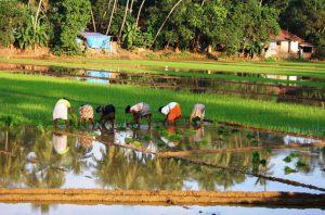 8 Replantation Work by Women & Men
