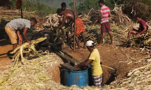 Sugarcane Crushing to Collect the Juice