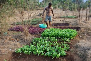Man Growing a Vegetable Patch