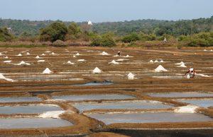 Salt Pans Goa