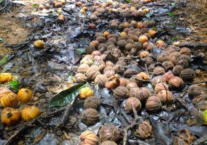 Wild Fruits on Forest Floor